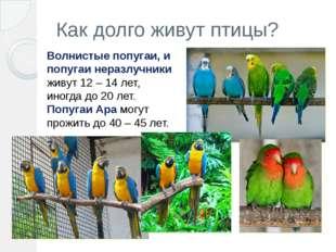 Как долго живут птицы? Волнистые попугаи, и попугаи неразлучники живут 12– 1
