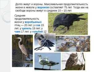 Долго живут и вороны. Максимальная продолжительность жизни в неволе у воронов