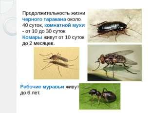 Продолжительность жизни черного таракана около 40 суток, комнатной мухи - от