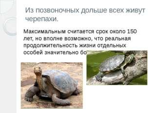 Из позвоночных дольше всех живут черепахи. Максимальным считается срок около