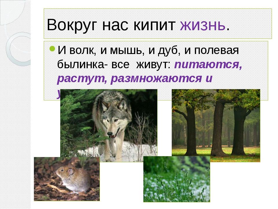 Вокруг нас кипит жизнь. И волк, и мышь, и дуб, и полевая былинка- все живут:...