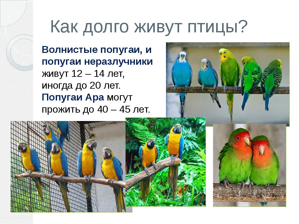 Как долго живут птицы? Волнистые попугаи, и попугаи неразлучники живут 12– 1...