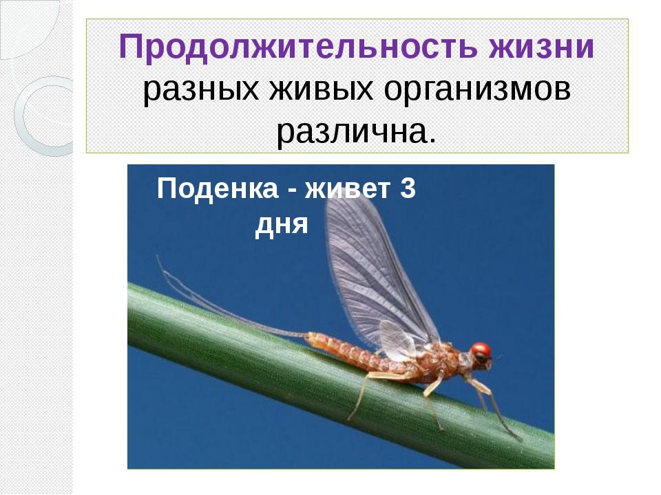 Продолжительность жизни разных живых организмов различна. Поденка - живет 3 дня