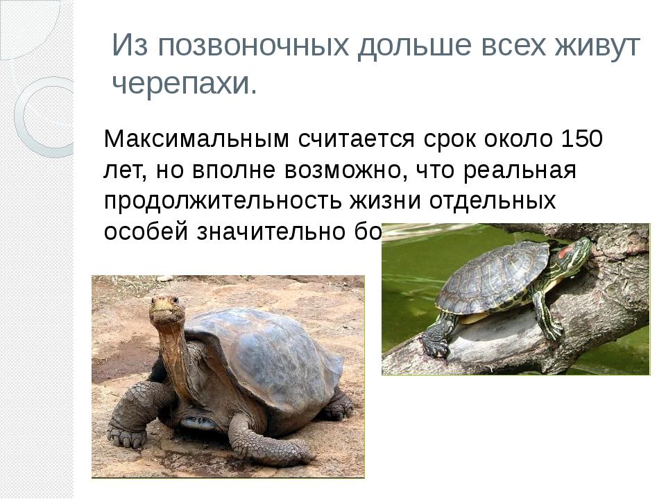Из позвоночных дольше всех живут черепахи. Максимальным считается срок около...