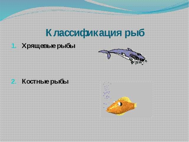 Классификация рыб Хрящевые рыбы Костные рыбы