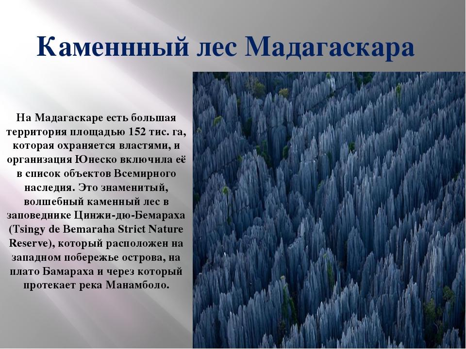 Каменнный лес Мадагаскара На Мадагаскаре есть большая территория площадью 15...