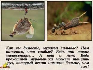 Как вы думаете, муравьи сильные? Нам кажется, что слабые? Ведь они такие мал