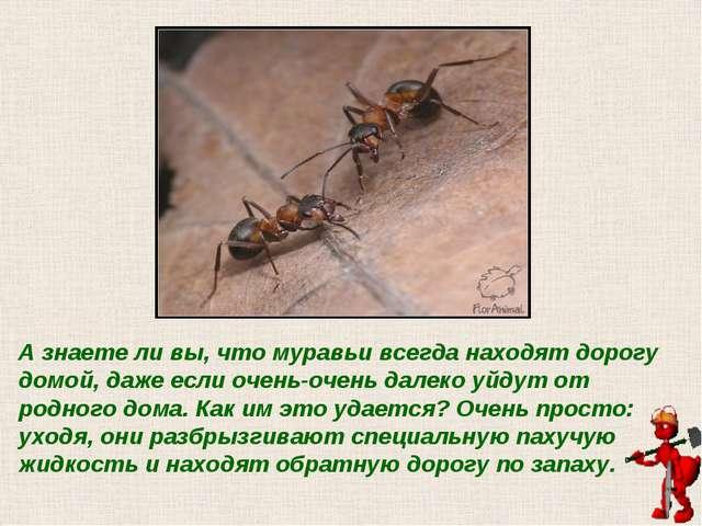 А знаете ли вы, что муравьи всегда находят дорогу домой, даже если очень-очен...