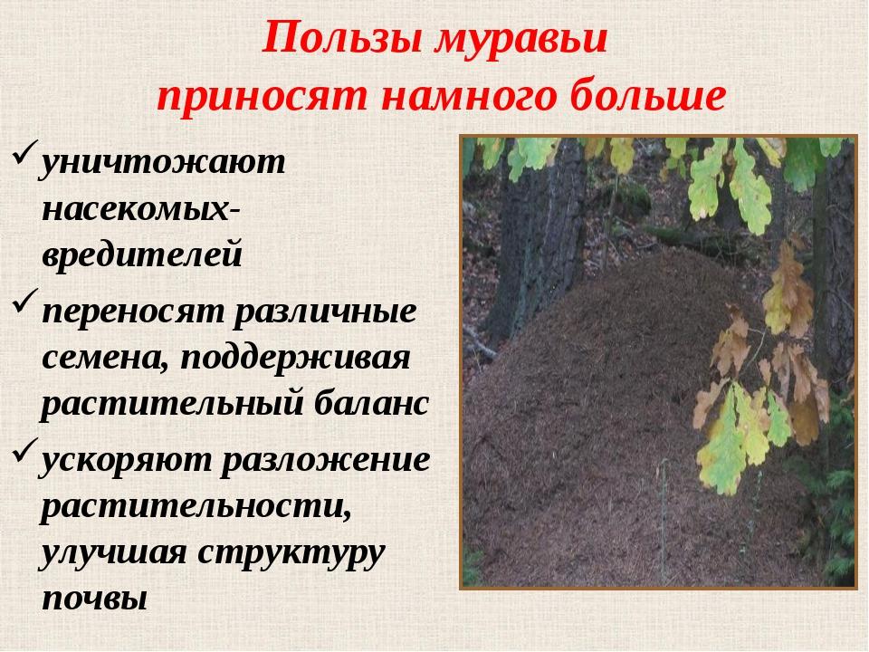 Пользы муравьи приносят намного больше уничтожают насекомых-вредителей перено...