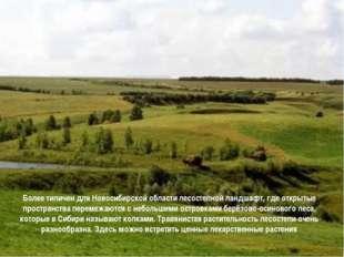 Более типичен для Новосибирской области лесостепной ландшафт, где открытые п