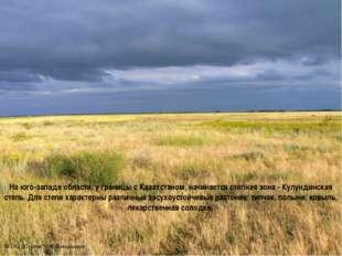 На юго-западе области, у границы с Казахстаном, начинается степная зона - Кул