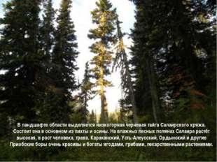 В ландшафте области выделяется низкогорная черневая тайга Салаирского кряжа.