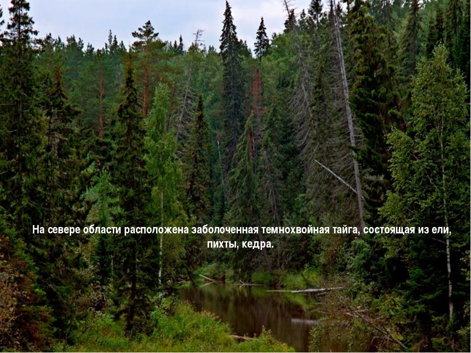 На севере области расположена заболоченная темнохвойная тайга, состоящая из е...
