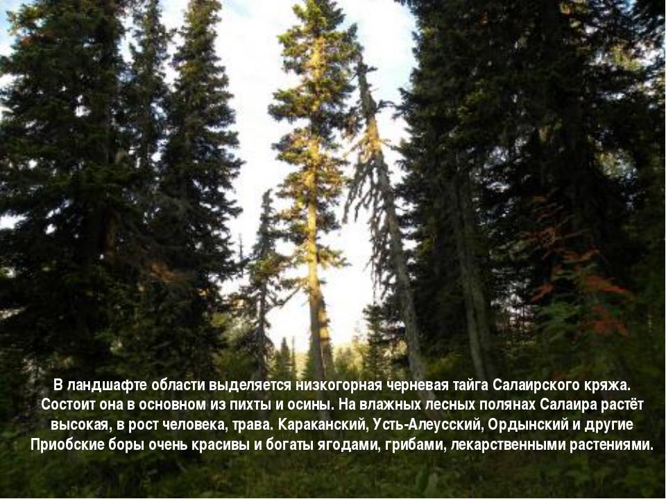 В ландшафте области выделяется низкогорная черневая тайга Салаирского кряжа....