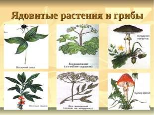 Ядовитые растения и грибы