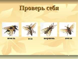 Проверь себя оса пчела шмель шершень