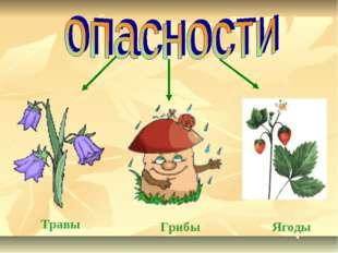 Травы Грибы Ягоды
