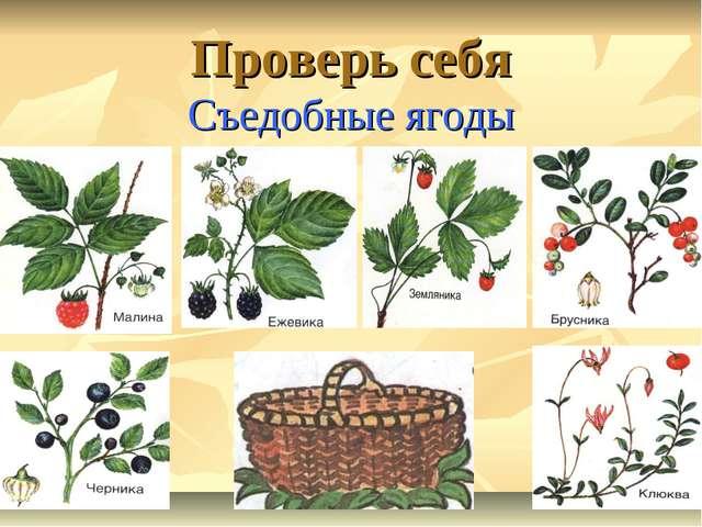 Проверь себя Съедобные ягоды