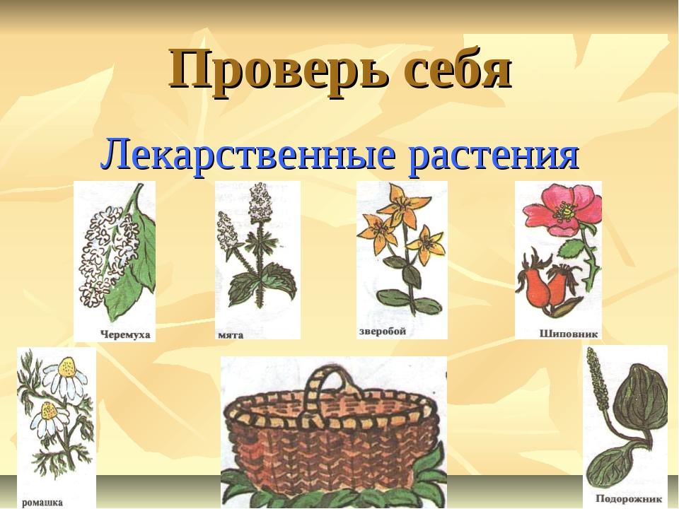 Проверь себя Лекарственные растения