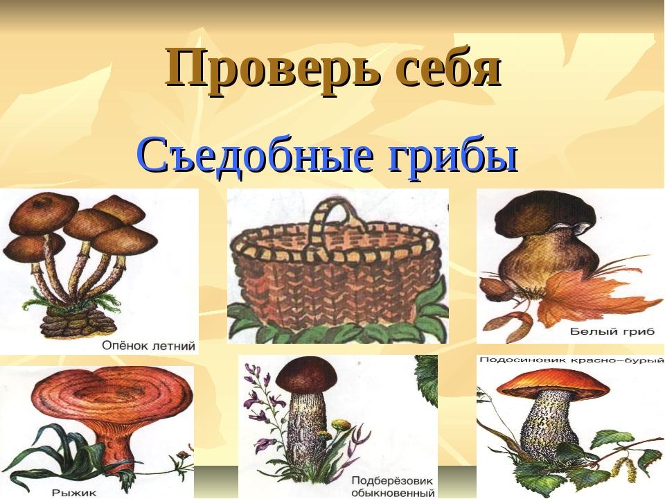 Проверь себя Съедобные грибы