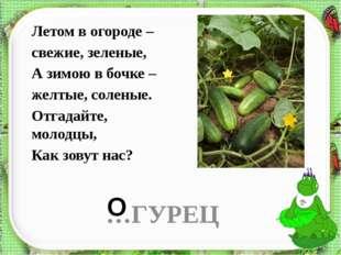 Летом в огороде – свежие, зеленые, А зимою в бочке – желтые, соленые. Отгадай