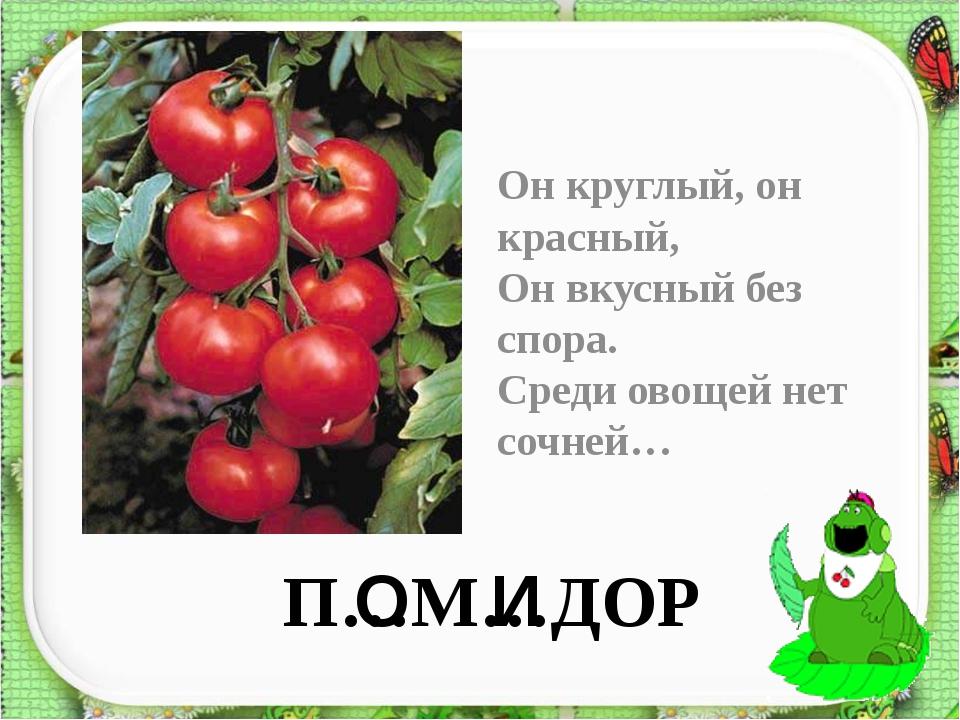 П…М…ДОР Он круглый, он красный, Он вкусный без спора. Среди овощей нет сочней...