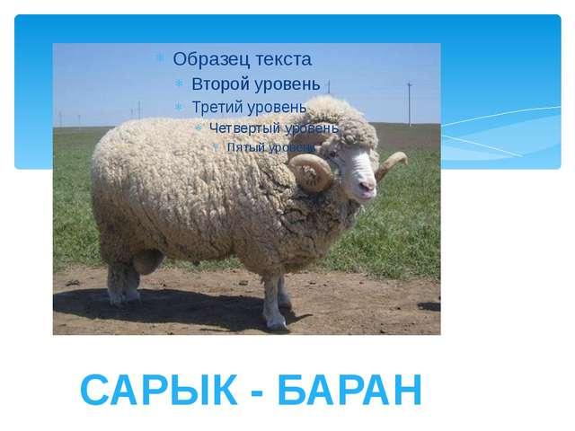 САРЫК - БАРАН