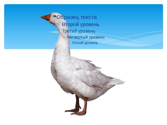 КАЗ - ГУСЬ