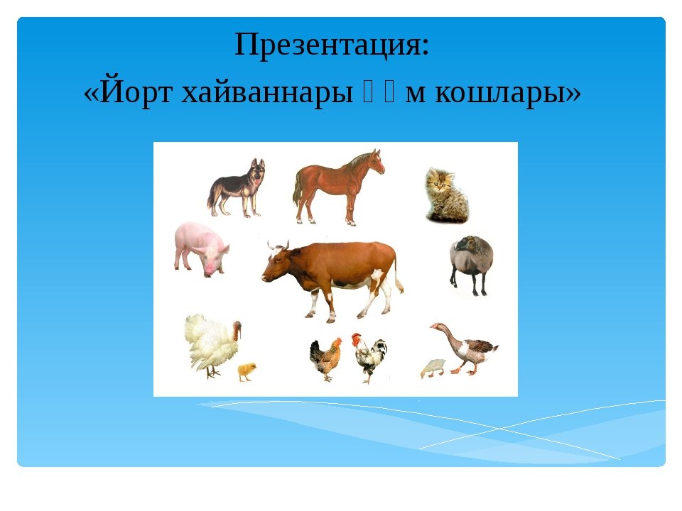Презентация: «Йорт хайваннары һәм кошлары»