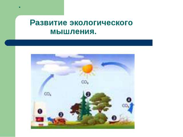 . Развитие экологического мышления.