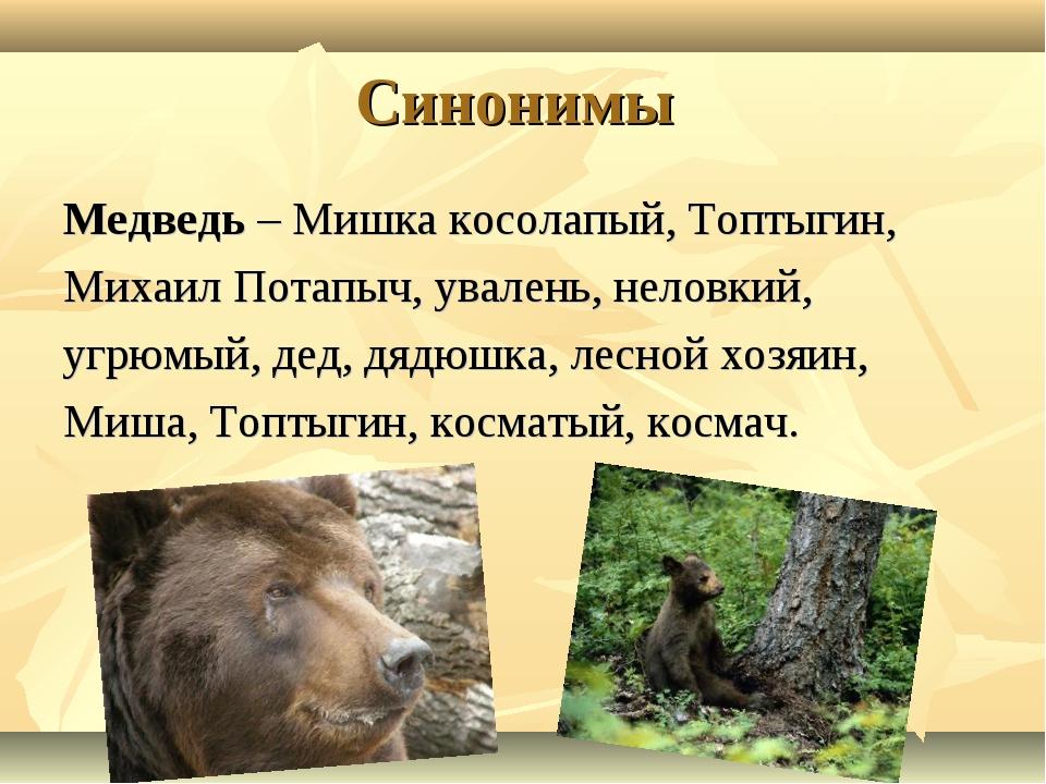 Синонимы Медведь – Мишка косолапый, Топтыгин, Михаил Потапыч, увалень, неловк...