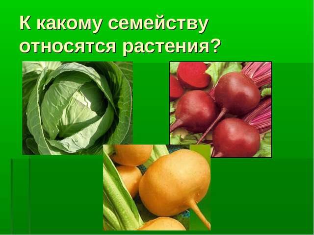 К какому семейству относятся растения?