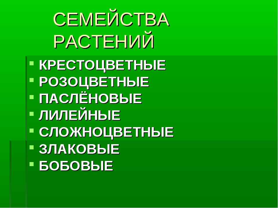 СЕМЕЙСТВА РАСТЕНИЙ КРЕСТОЦВЕТНЫЕ РОЗОЦВЕТНЫЕ ПАСЛЁНОВЫЕ ЛИЛЕЙНЫЕ СЛОЖНОЦВЕТНЫ...