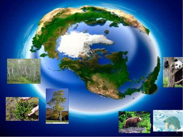 Почему живая природа так разнообразна?