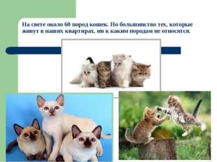 На свете около 60 пород кошек. Но большинство тех, которые живут в наших квар