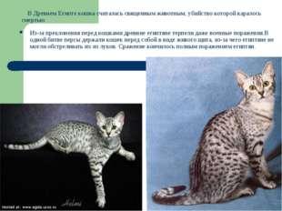 В Древнем Египте кошка считалась священным животным, убийство которой карало