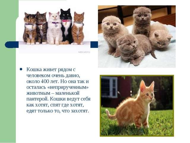 Кошка живет рядом с человеком очень давно, около 400 лет. Но она так и остала...