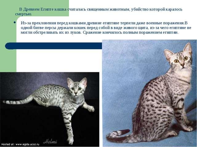 В Древнем Египте кошка считалась священным животным, убийство которой карало...