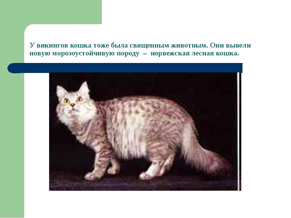 У викингов кошка тоже была священным животным. Они вывели новую морозоустойчи...