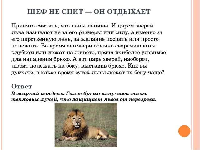 ШЕФ НЕ СПИТ— ОН ОТДЫХАЕТ Принято считать, что львы ленивы. И царем зверей ль...