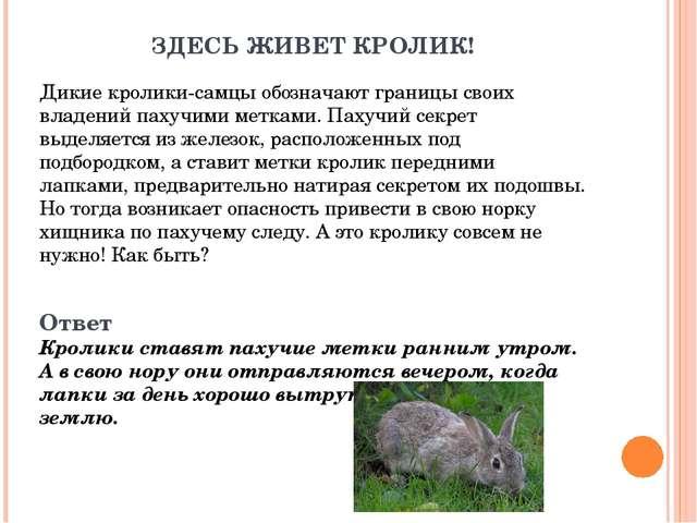 ЗДЕСЬ ЖИВЕТ КРОЛИК! Дикие кролики-самцы обозначают границы своих владений пах...