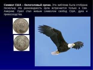 Символ США – белоголовый орлан. Эта эмблема была отобрана поскольку эта разно