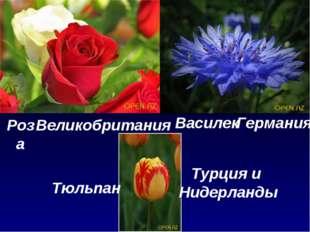 Великобритания Роза Германия Василек Турция и Нидерланды Тюльпан