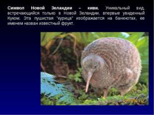 Символ Новой Зеландии – киви. Уникальный вид, встречающийся только в Новой Зе