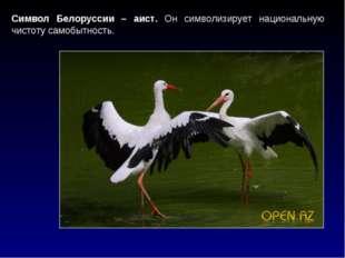Символ Белоруссии – аист. Он символизирует национальную чистоту самобытность.