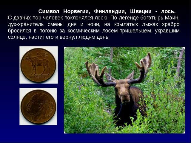 Символ Норвегии, Финляндии, Швеции - лось. С давних пор человек поклонялся л...