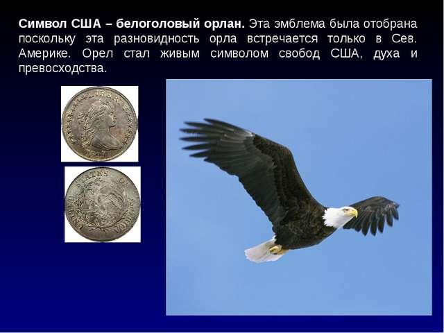 Символ США – белоголовый орлан. Эта эмблема была отобрана поскольку эта разно...