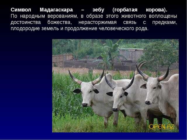 Символ Мадагаскара – зебу (горбатая корова).  По народным верованиям, в обра...