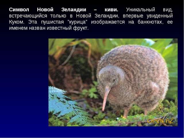 Символ Новой Зеландии – киви. Уникальный вид, встречающийся только в Новой Зе...