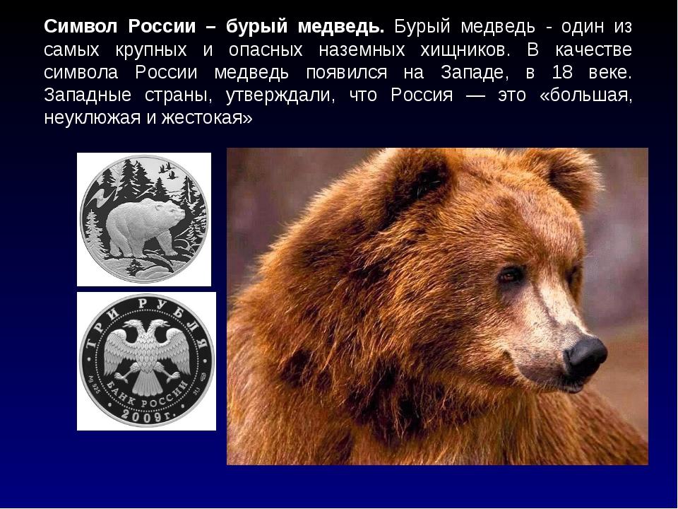 Символ России – бурый медведь. Бурый медведь - один из самых крупных и опасны...